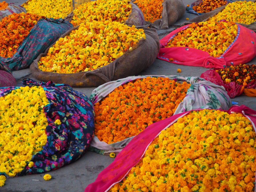 Bags of marigold flowers